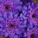 Flower Color Meanings And Symbolism Color Psychology