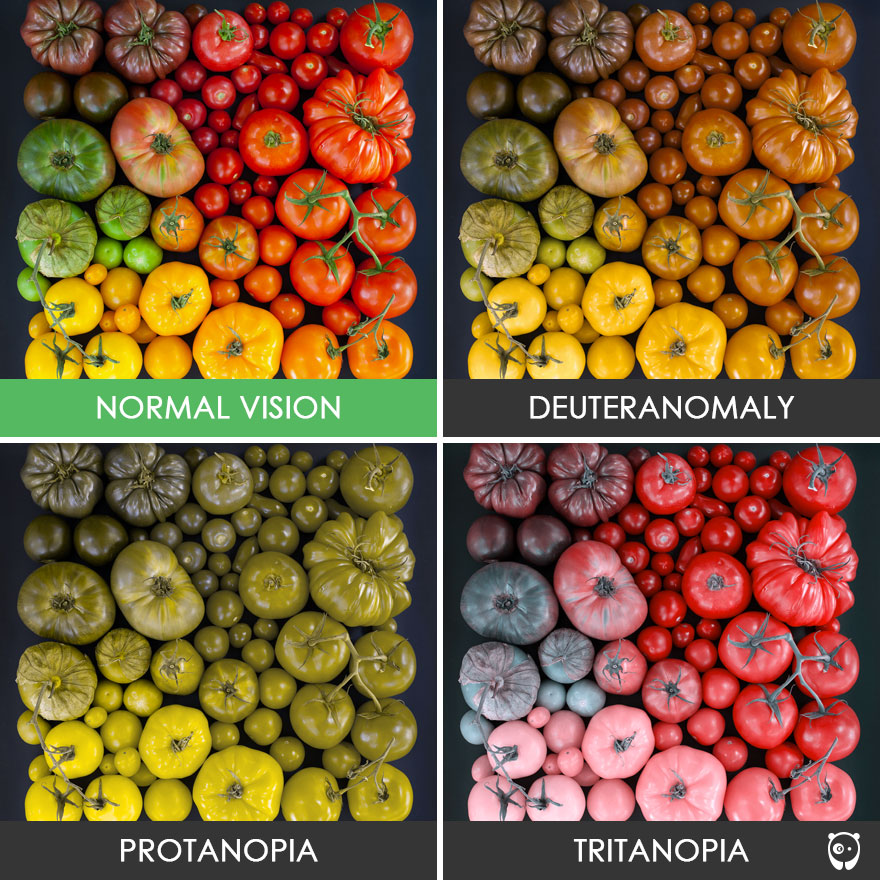 Color Blindness Online Tests Gles Effects Treatments