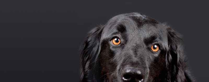 Do Dogs See Color What Colors