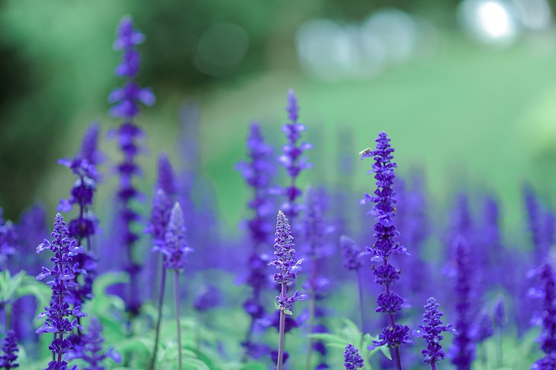 Lilac Color Psychology